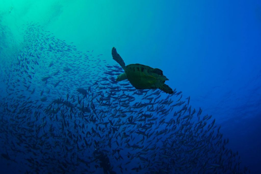Diving in Maumere - LAMIMA Luxury Sailing Yacht Charter
