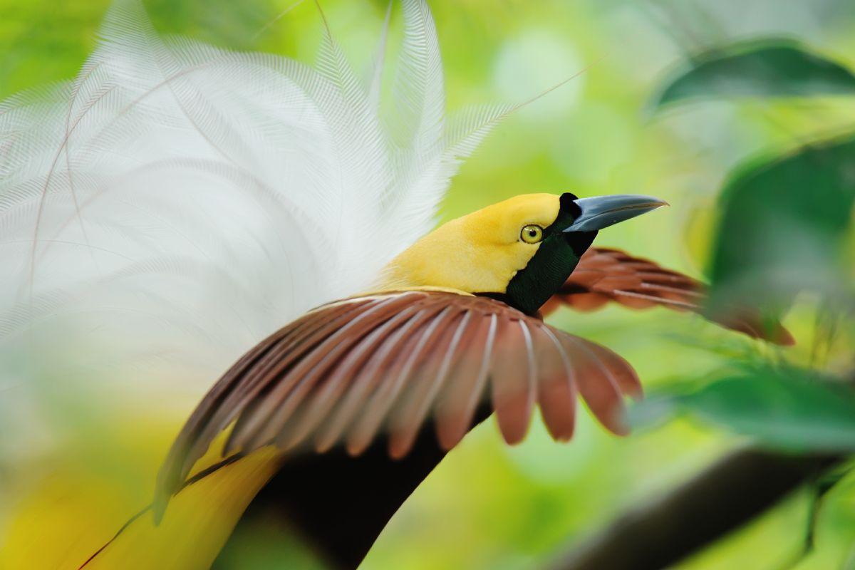 Birds-Of-Paradise-LAMIMA-Luxury-Sailing-Yacht-Charter
