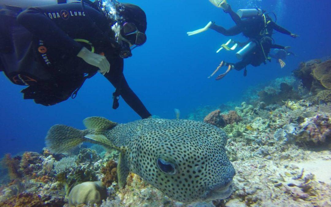 Raja Ampat — Diver's Paradise