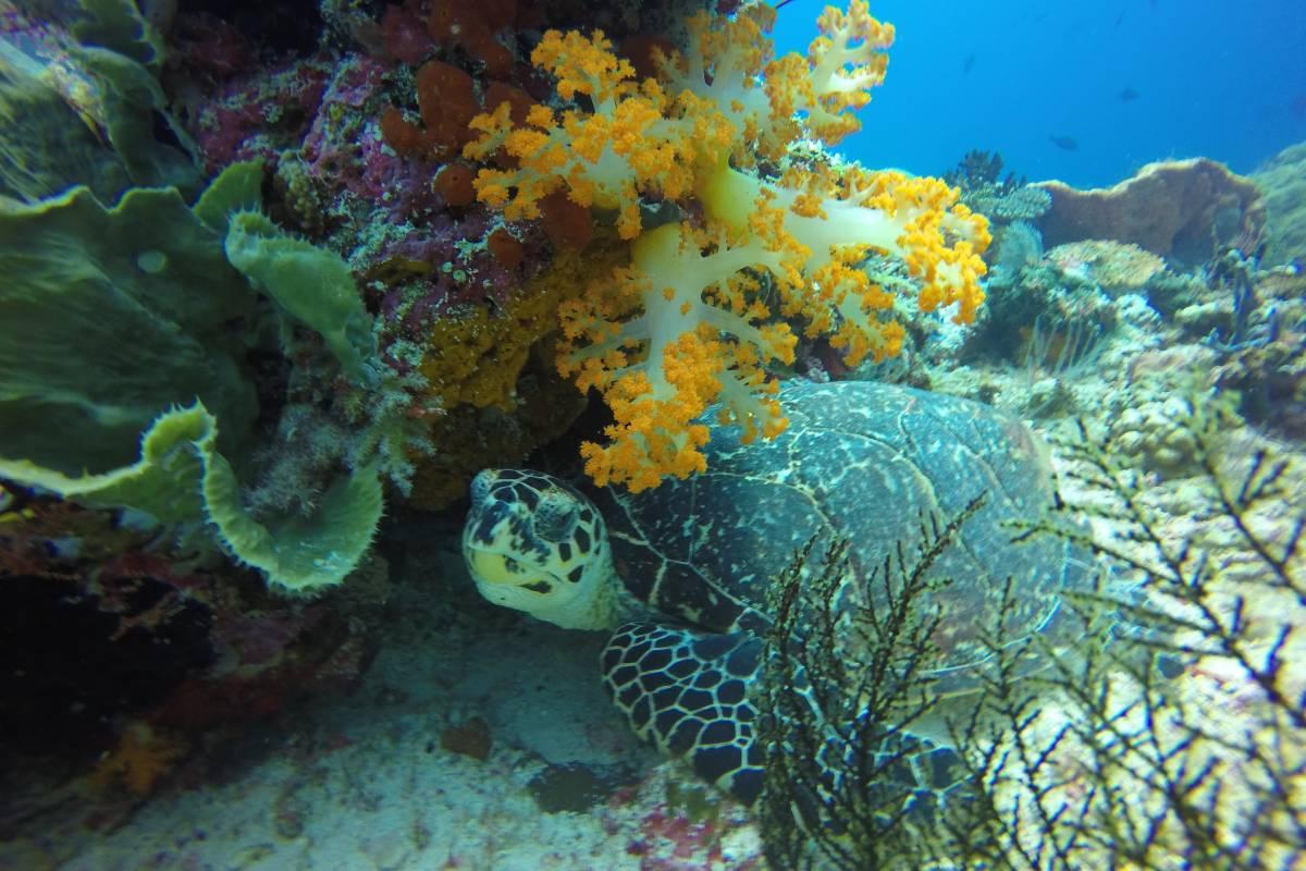 Raja-Ampat-Divers-Paradise-LAMIMA-Luxury-Sailing-Yacht-Charter-2
