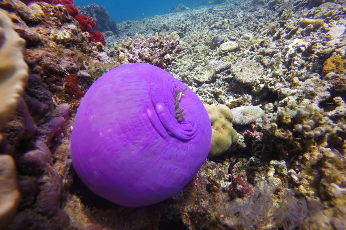 Raja-Ampat-Divers-Paradise-LAMIMA-Luxury-Sailing-Yacht-Charter-3