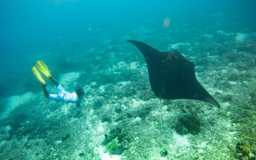 Manta Rays — Mystical Beings of The Sea