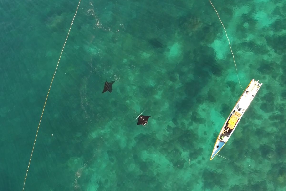 Fishing-Boat-With-Mantas-LAMIMA-Luxury-Yacht-Charter-Indonesia