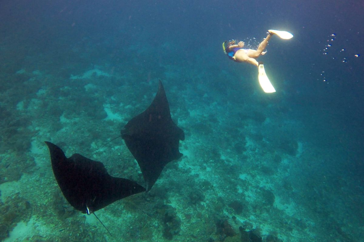 Free-Diving-With-Mantas-LAMIMA-Luxury-Yacht-Charter-Indonesia