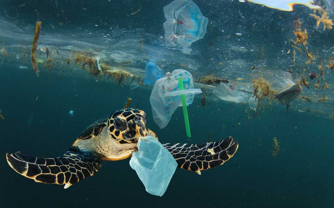 All Hands on Deck for a Plastic-Free Indonesia