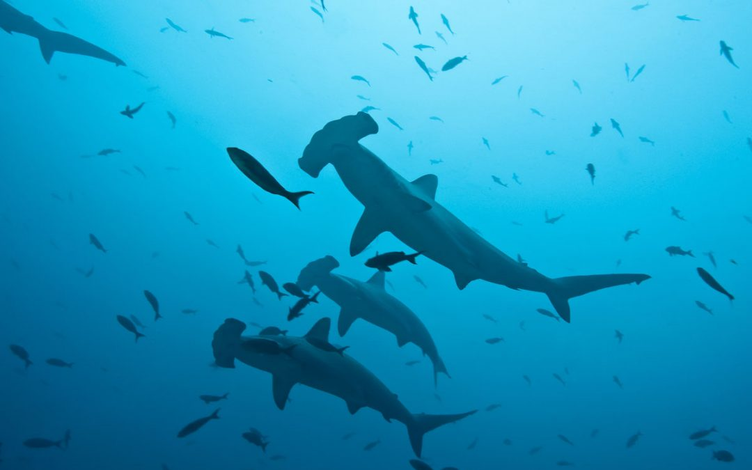 Meeting the Hammerhead: A Dream Encounter